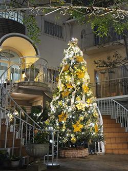 2013 クリスマスツリー 登場
