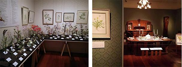 尾州徳川の花相撲 帝もサムライも熱中!いとしの植物たち 展示参加